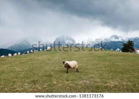 mountains village sheep grass forest #1381173176