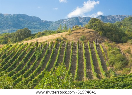 stock-photo-mountains-vineyard-and-summer-51594841.jpg
