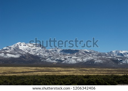 mountains with snow contrasting with blue sky, yellow vegetation and green vegetation in sajama national park in Bolivia #1206342406