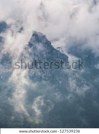 mountains with trees and fog in monochrome color shot