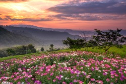 mountains with wild flower under mist in the morning with beautiful sky
