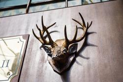 Mounted head of deer