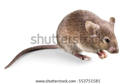 Mouse. #553751581