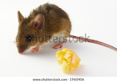 Mouse and cheese - white background