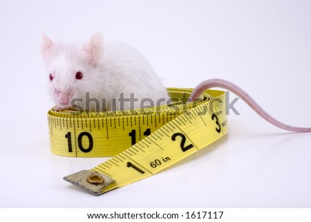 Mouse and tape measure.