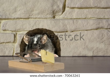 mouse and trap on stone background - stock photo