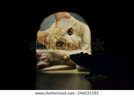 Stock Photo mouse hidden in his lair while the cat hunts