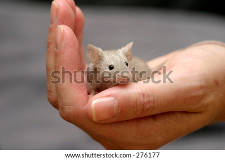 Mouse in a hand