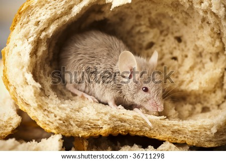 Mouse in a loaf