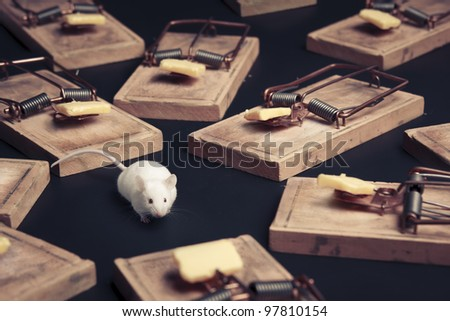 mouse in danger surrounded by mouse traps #97810154
