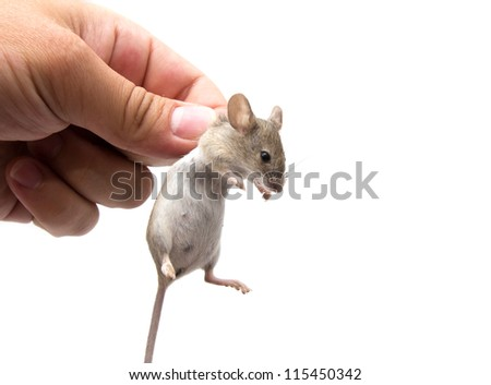 mouse in hand on a white background