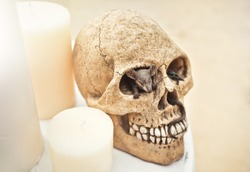 Mouse in Skull and Big Candle on Table on the Beach. Pirate Style Wedding  Design