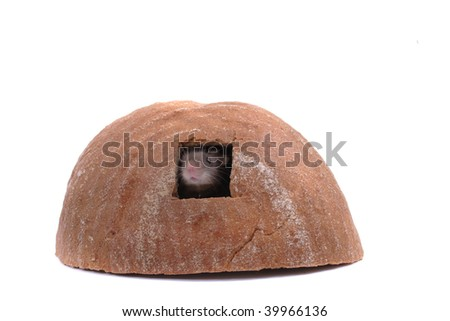 mouse in their bread house
