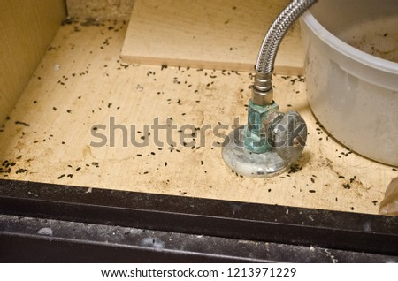 Mouse poop turds feces under a bathroom sink for pest control or home repairs.  Vermin infestation of mice or rodents.