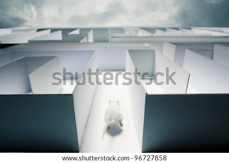 mouse running inside a maze - stock photo