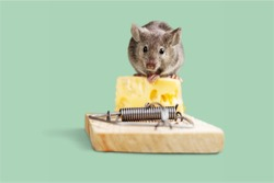 Mouse trap with cheese and mouse on