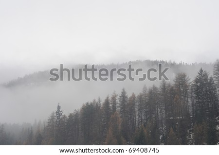 Moutain forest covered with clouds. Foggy day.