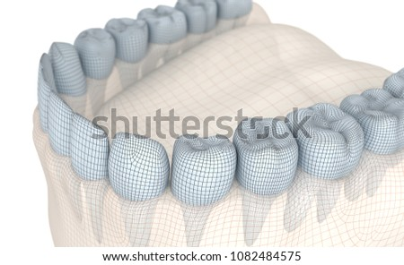 Mouth gum and teeth. Wire 3d model illustration