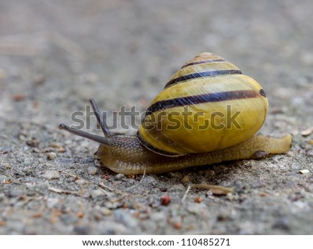 Moving at a snail's pace
