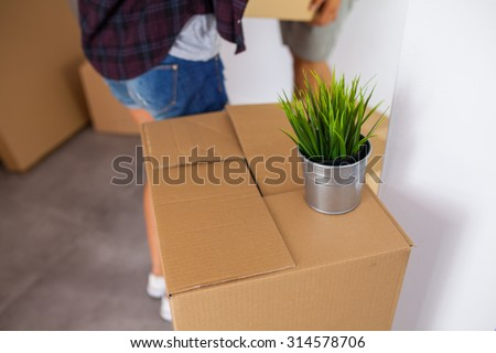 Moving box with a plant on it. Time to unpack. Close up