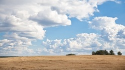 Mown field of wheat and amazing blue sky. blue sky and white clouds. Beautiful landscape. Nice weather in late summer.