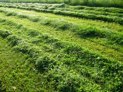 mown grass with lines