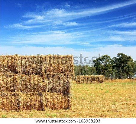 mown hay harvested in large briquettes on the field against a blue sky with clouds