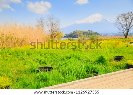 Mt diamond fuji with snow, flower garden and the wooden bridge at Kawaguchiko lake in japan, Mt Fuji is one of famous place in Japan #1126927355