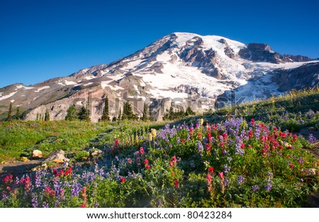 Mt Rainier National Park Wildflowers Summer Time Cascade Mountain Wilderness