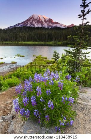Mt. Rainier with wildflower