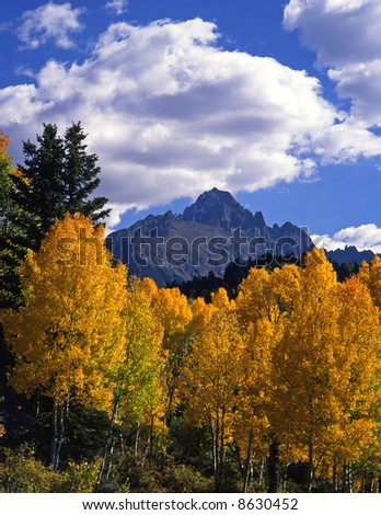 Mt. Sneffels and aspen trees in the Uncompahgre National Forest of Colorado, photographed during the autumn season.
