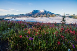 Mt St Helens and wildflowers with low fog in summer