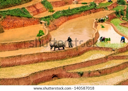 MUCANGCHAI VIETNAM MAY 19 Farmer plows rice field on May 14 2013 in Mucangchai Although growth and success of its tourist industry Vietnam economy is still predominantly agricultural