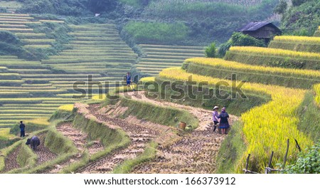 MUCANHCHAI ,VIETNAM - OCTOBER 5 : farmers in their fields on October 5 , 2013 in MuCang Chai,VietNam . Agriculture is an important economic sector in Vietnam