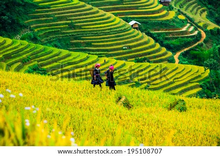 MUCANHCHAI ,VIETNAM - OCTOBER 01 : The farmers in their fields on October 01, 2013 in MuCang Chai,VietNam . Agriculture is an important economic sector in Vietnam