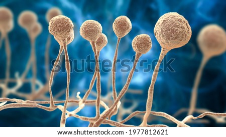 Mucor mold, black fungus, yellow fungus, bread mold fungi, 3D illustration. Opportunistic fungi that cause mucormycosis involving skin, nasal sinuses, brain and lungs. Complication of Covid-19 Сток-фото ©