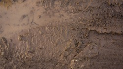 Mud texture background