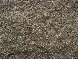 Mud texture or wet brown soil as natural organic clay and geological sediment mixture as in roughing it in a dirty muddy country road bog after the rain or rainy season found in a damp moist climate