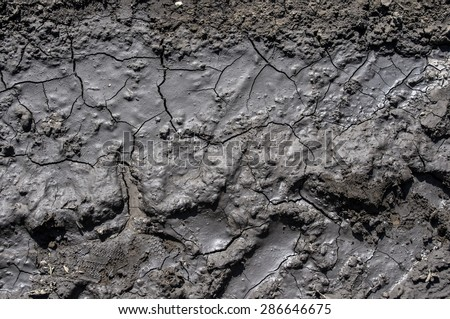 Mud texture: wet cracked ground