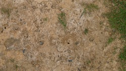 Mud with bits of Grass texture