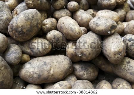 Muddy Maris Piper Potatoes