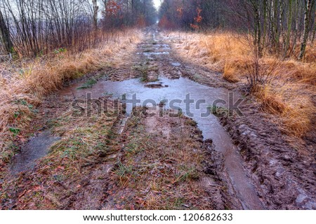 Muddy path with puddles