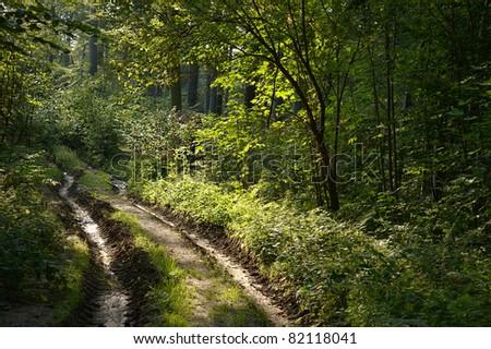 Muddy road through forest in Poland
