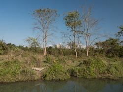 Mugger Crocodile sleeping at Chitwan National Park.