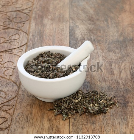 Mugwort leaf herb used in alternative and chinese herbal medicine to stimulate gastric juices and bile secretion, as a liver tonic and sedative. In a mortar with pestle  Artemesia vulgaris.