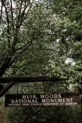 Muir Woods National Monument entrance, tall old redwood trees as background, near San Francisco, California