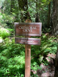 Muir Woods National Monument in Marin County