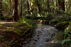 Muir Woods National Monument near San Francisco, California, United States