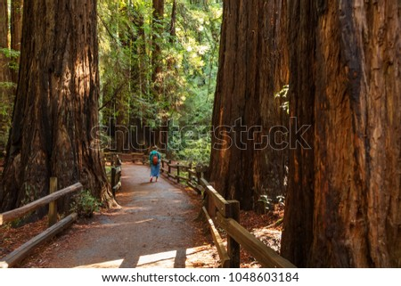 Muir woods National Monument near San Francisco in California, USA #1048603184