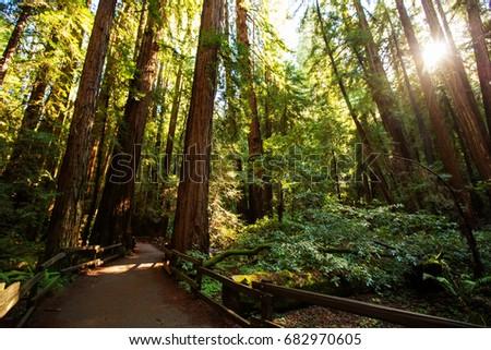 Muir woods National Monument near San Francisco in California, USA #682970605